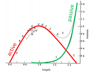 Hill graph